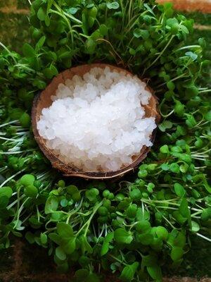 Индийский морской рис для кваса / водный кефир