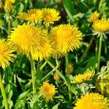 Куль-Баба, квіти сушені, 0205