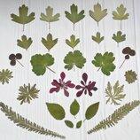 Сухоцветы для эпоксидной смолы. Гербарий. Набор листьев