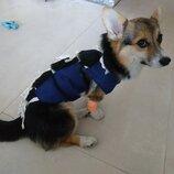 Послеоперационная попона бандаж 4 для собак