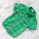 Стильная Рубашка с коротким рукавом Mini Club
