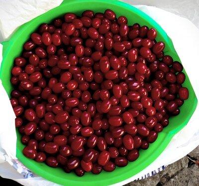 Кизил, свежие ягоды, есть слива, и сушки