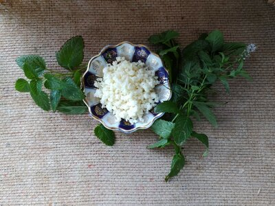 Продано: Тибетский молочный гриб / живая закваска для кефира