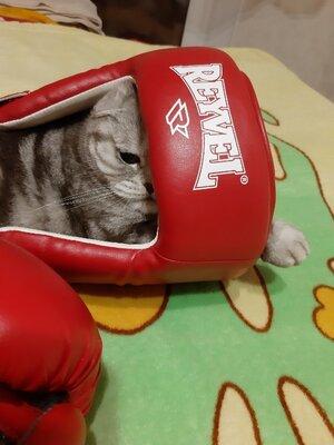 Продано: Шлем бокс р.Л