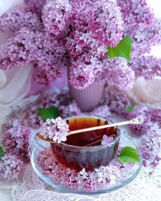 Квіти бузку сушені, 1156
