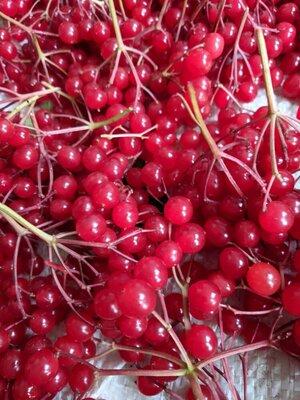 Калина, ягоди калини